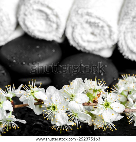 Spa background of zen stones, blooming twig plum, white towels, closeup  - stock photo