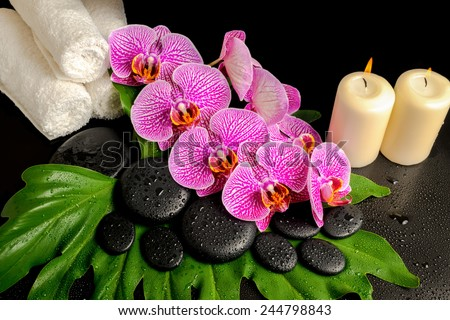 spa background of zen stones with dew, blooming twig stripped violet orchid (phalaenopsis), stacked towel and candles on green leaf - stock photo