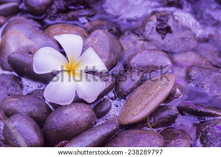 spa concept background - Zen massage stones with frangipani plumeria flower in water reflection - stock photo