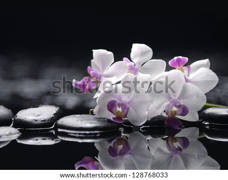 spa concept �branch white orchid with wet background - stock photo