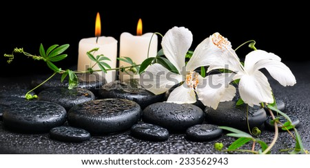 spa concept of blooming white hibiscus, twig with tendril passionflower and candles on zen basalt stones, with drops, panorama - stock photo