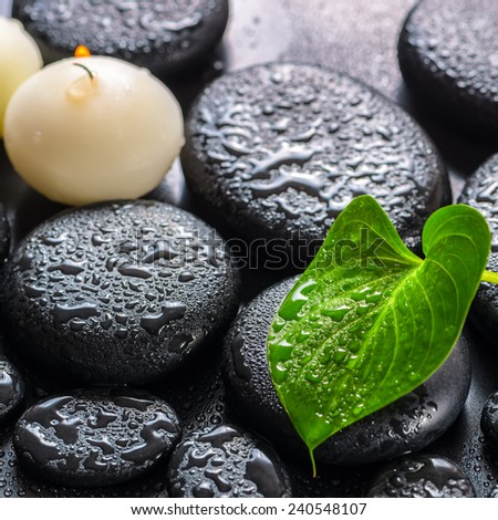 spa concept of green leaf Calla lily and candles on zen basalt stones with drops, closeup - stock photo