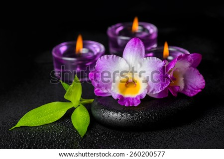 spa concept of purple orchid dendrobium, twig bamboo with dew and candles on black zen stones - stock photo