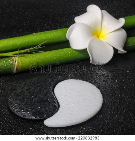 spa concept of tropical frangipani flower, symbol Yin Yang and natural bamboo on zen basalt stones with drops, closeup - stock photo