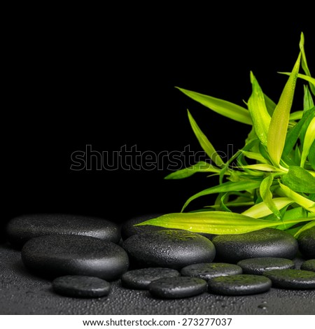 spa concept of twigs bamboo with dew on zen basalt stones, closeup - stock photo