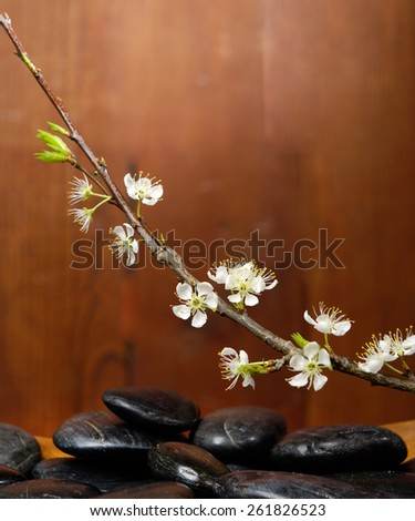 spa concept with zen basalt stones in bowl mat with cherry flower  - stock photo