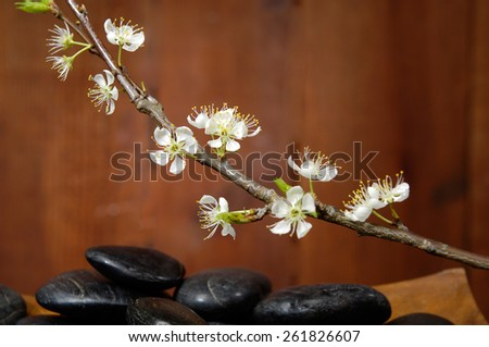 spa concept zen basalt stones in bowl mat with cherry  - stock photo