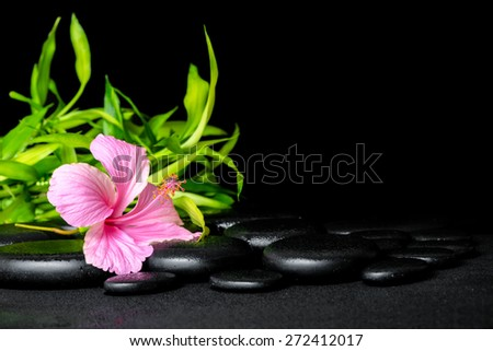 spa still life of pink hibiscus flower and twigs bamboo on zen basalt stones with drops - stock photo