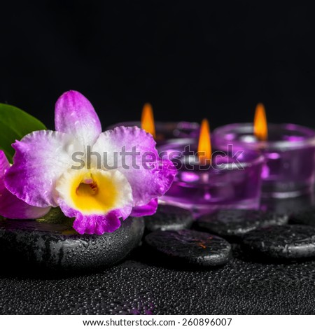spa still life of purple orchid dendrobium, green leaf Calla lily and candles with drops on black zen stones, closeup   - stock photo
