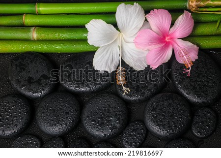 spa still life of white, pink hibiscus flowers and natural bamboo on zen basalt stones with drops - stock photo