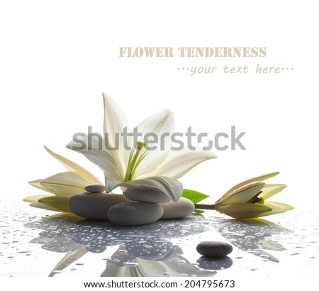 spa still life with white lily, stones and water drop on white bright table on white background - stock photo