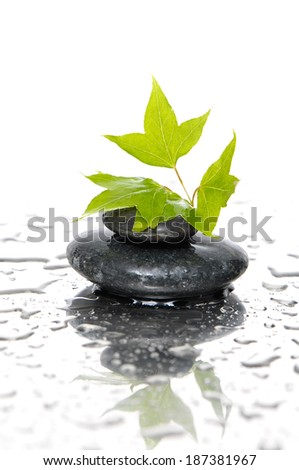 Spa still with Wet pebble stones with green leafs - stock photo