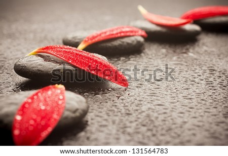 Spa stones and black background. Red gerbera petals. - stock photo