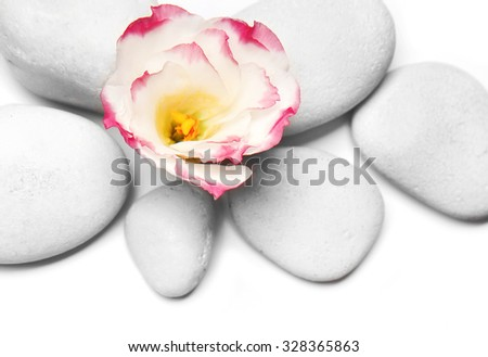 Spa stones and flower on white background - stock photo