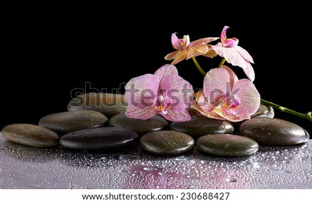 Spa stones and orchid flowers with reflection  on black - stock photo