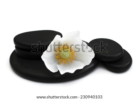 Spa stones,  flower heads on a white background - stock photo