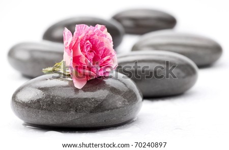 Spa stones with rose flower on a white background. - stock photo