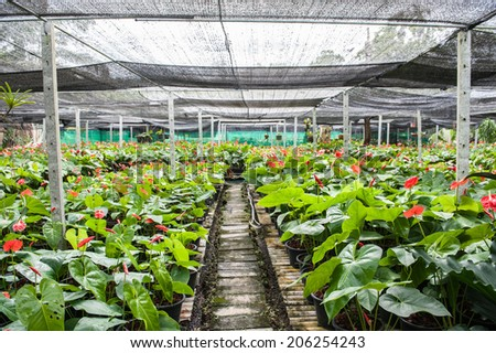 spadix grown green houses - stock photo