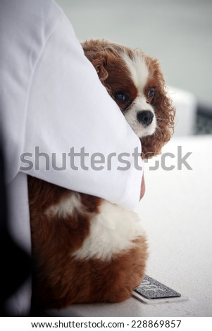 Spaniel dog hugged by owner. - stock photo