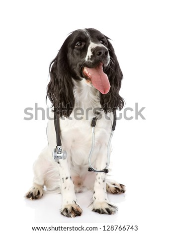 spaniel dog with a stethoscope on his neck. looking away. isolated on white background - stock photo