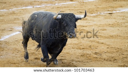 Spanish bulls (toros bravos) in Guadalajara province, Castilla La-Mancha, central Spain. Famous from the traditional Spanish bullfights. - stock photo