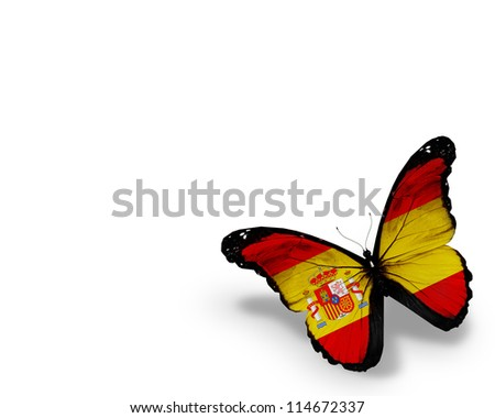 Spanish flag butterfly, isolated on white background - stock photo