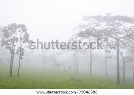 Sparse forest in the national park with the fog. - stock photo