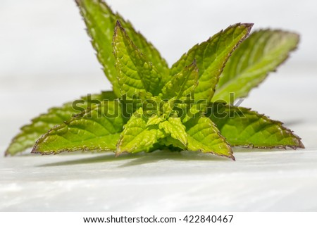 spearmint front isolated - stock photo