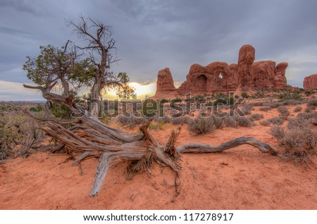 Special Tree at Arches National Park, Utah. - stock photo