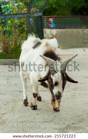speckled goat at the zoo - stock photo