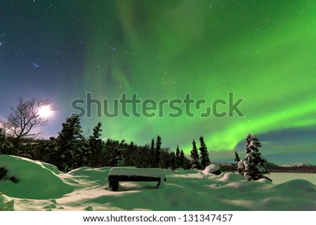 Spectacular display of intense Northern Lights or Aurora borealis or polar lights forming green swirls over snowy bench at the edge of boreal forest  taiga of Yukon Territory  Canada winter landscape - stock photo