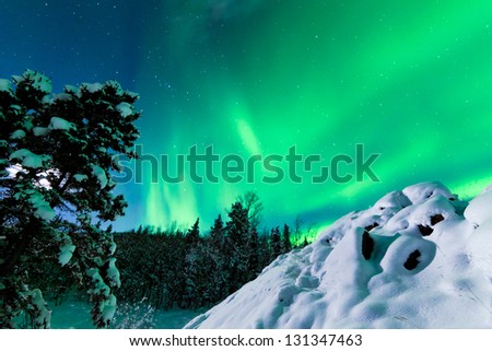 Spectacular display of intense Northern Lights or Aurora borealis or polar lights forming green swirls over snowy boreal forest  taiga of Yukon Territory  Canada winter landscape - stock photo