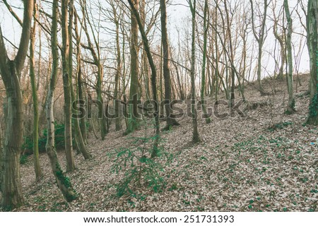 spectral forest scene with sunset light - stock photo