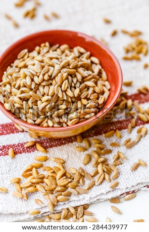 Spelt grains in a bowl - stock photo