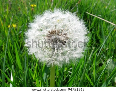 Sphere of a Dandelion - stock photo