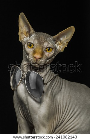 sphinx cat with sunglasses of black background - stock photo