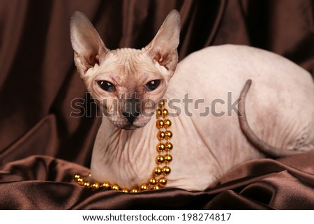 Sphynx hairless cat on fabric background - stock photo