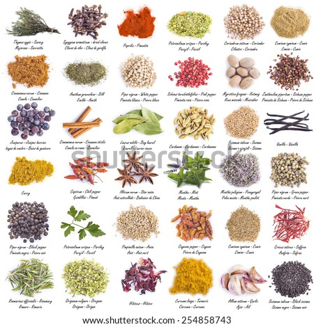 Spices set with a great assortment isolated on a white background and with their scientific names and their names in English, Spanish and French - stock photo