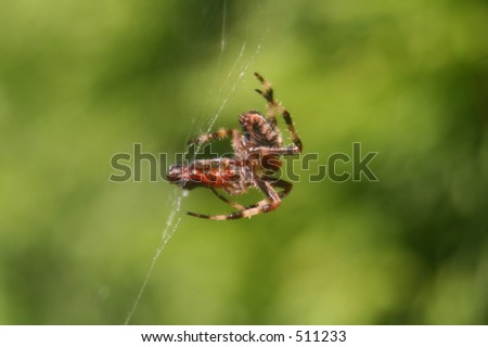 Spider and Lunch - stock photo
