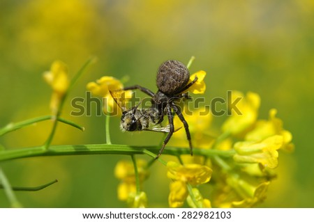 Spider and prey - stock photo