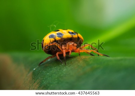 Spider Animal - stock photo