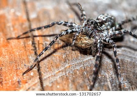 Spider caught the mosquito - stock photo