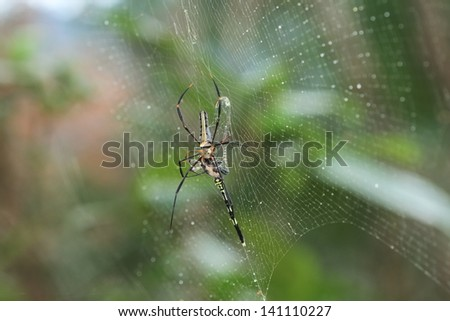 Spider eat dragonfly in rainforest southern of thailand - stock photo