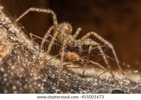 Spider eating it's prey - stock photo