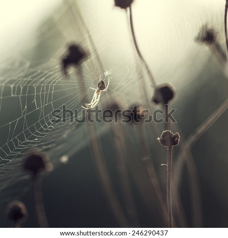 spider hunts in forest - stock photo