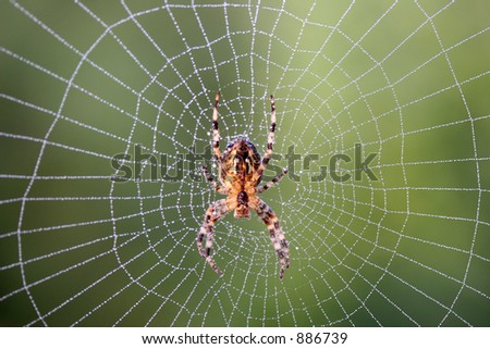 Spider in a web, Ashdown Forest, Sussex, england - stock photo