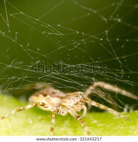 Spider in nature. close - stock photo