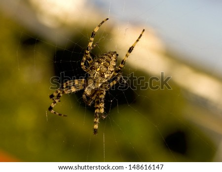 Spider in nature environment  - stock photo
