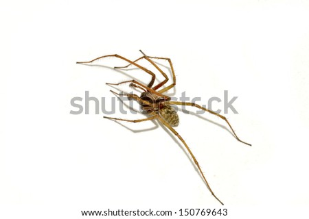 Spider isolated on white background - stock photo