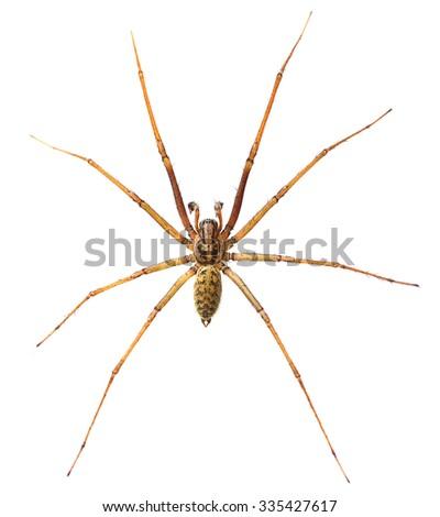 Spider macro isolated on white background - stock photo